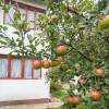 Comision 0%  Casa in zona turistica Dragoslavele  thumb 2