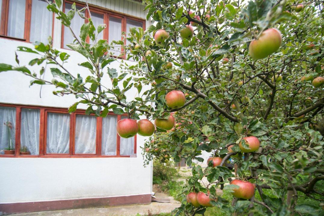 Comision 0%  Casa in zona turistica Dragoslavele  2